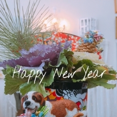 ॱ॰*❅HAPPY NEW YEAR❅*॰ॱ