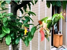 [una rama de rico] ウナラマデリコ ニュース