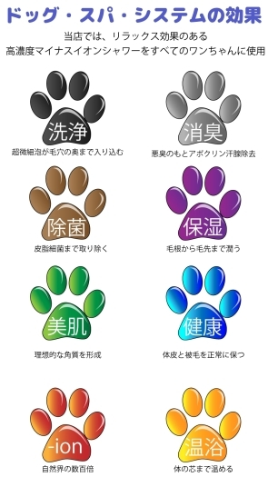 「Dog Salon R&D+」