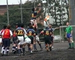 TOMCATS・RUGBY・FOOTBALL・CLUB