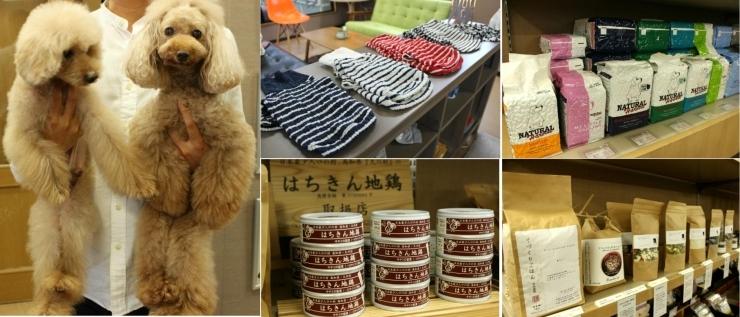 dog shop PRECIOUS (プリシャス)