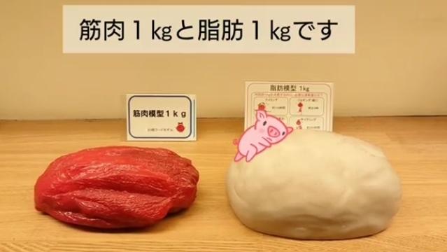 筋肉1kgと脂肪1kgの見た目の違い!   ホグレルフィットネスのニュース   まいぷれ[尾道市]
