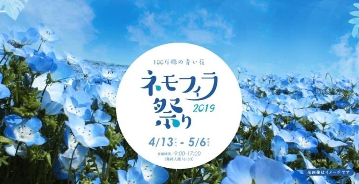 ネモフィラ祭り 2019【2019年4月13日(土) ~ 5月6日(月)】