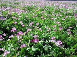 春先にレンゲソウが咲いていて綺麗だな!ってだけではなく、そこにも田宮さんのこだわりが…