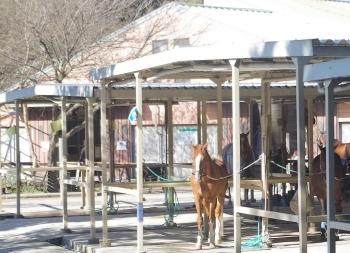 伊奈 クレイン 乗馬 クラブ