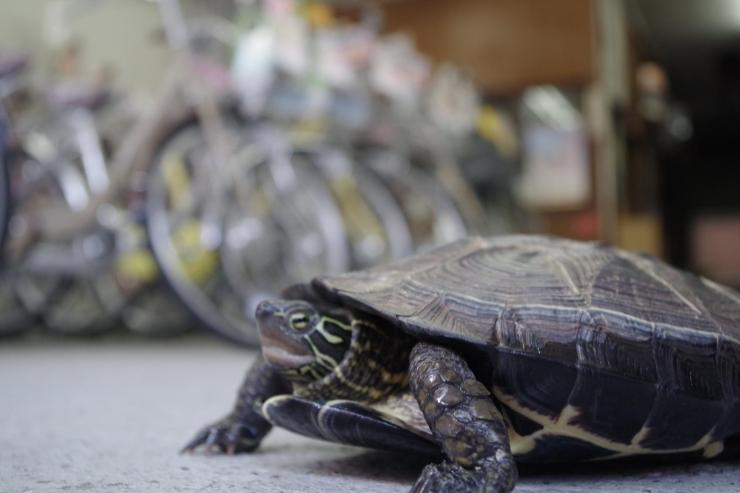 上野亀商店