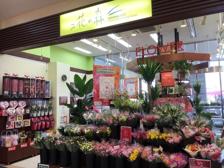 花の森 MIYAMOTO(ミヤモト)ゆめタウン広島店