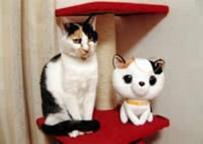 むかい猫と犬の病院