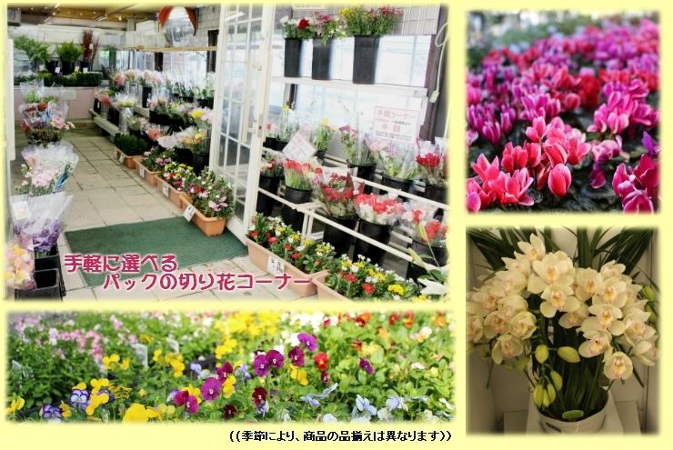 ガーデンファーム 花市場